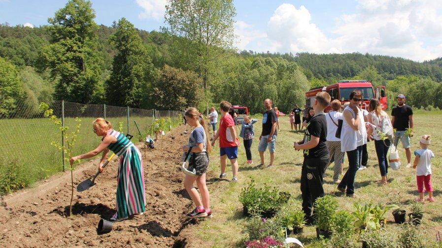Od lipy do miodu – rodzinne sadzenie drzewek